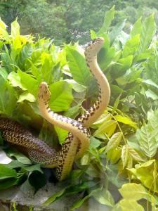 Il serpente è anche forza, istintualità ed energia trasformativa